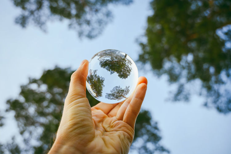 Low angle view of cropped hand holding crystal ball against trees