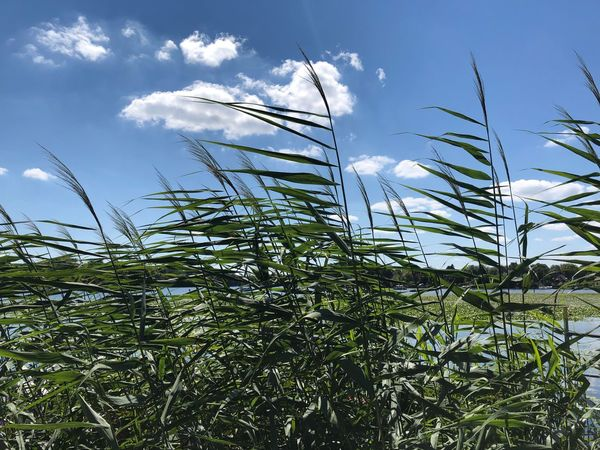 Havel River Summer Summertime IPhone X IPhone X Photography Havel Potsdam Plant Sky Growth Cloud - Sky Beauty In Nature Nature Low Angle View No People Tree Outdoors Day Tranquility Green Color Sunlight Land Environment Tranquil Scene Scenics - Nature Field Freshness