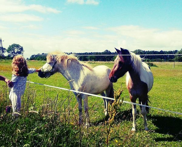Relaxing Travel Holidays ☀ Beautiful Day I Love Horses Children Natural Beauty Amazing Day Pets PhonePhotography