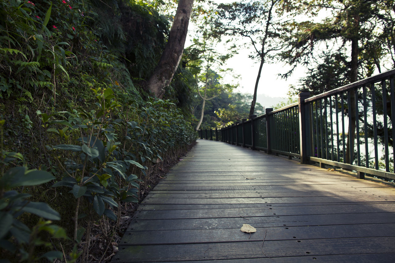 plant, tree, the way forward, direction, nature, no people, footpath, railing, day, growth, forest, tranquility, architecture, outdoors, built structure, connection, footbridge, bridge, land, diminishing perspective, long