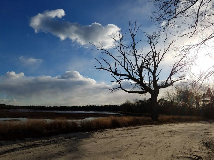 Tree Nature Cloud - Sky Sky Outdoors Landscape No People Storm Cloud Beauty In Nature Day ThatTreeThere Abandonedcranberrybog
