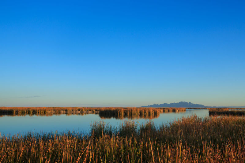 Wildlife marsh in Utah Lake Water Sky Nature Landscape Marsh Grass Clear Sky Beauty In Nature Sunrise No People Outdoors Fish Springs National Wildlife Refuge Utah Wildlife Refuge