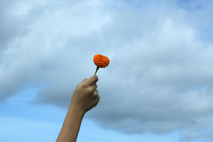 Low angle view of hand holding flower against sky