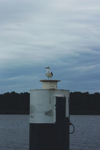 Water Cloud - Sky Nautical Outdoors Birds Seagull EyeEm Best Shots - Nature Clouds And Sky Dramatic Sky Animal Themes No People Nature Animals In The Wild Sky EyeEm Selects Bird Animal Wildlife Sea Sea And Sky Sky And Clouds Beauty In Nature