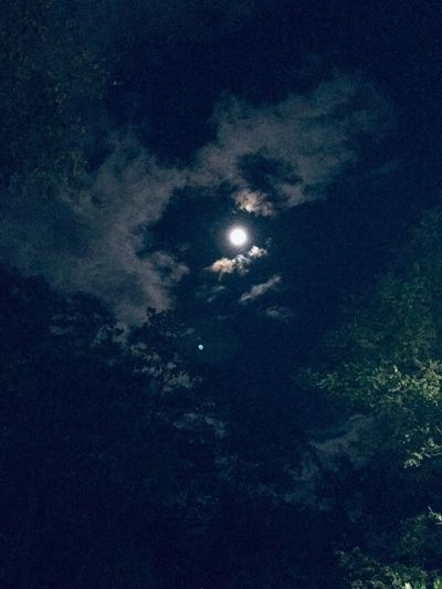Full moon Night Sky Moon Low Angle View Nature Beauty In Nature No People Moonlight Cloud - Sky Tranquility Illuminated Scenics - Nature Full Moon Outdoors Tranquil Scene Exploration Plant Space Tree Dark