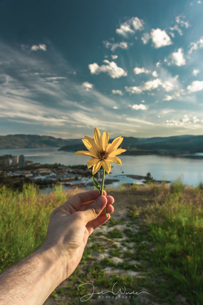 Flower Human Body Part Day One Person Holding Flower Head Springtime Beauty In Nature Human Hand Uncultivated Nature Outdoors Close-up Cloud - Sky Water Landscape Freshness Sky Lake Fragility