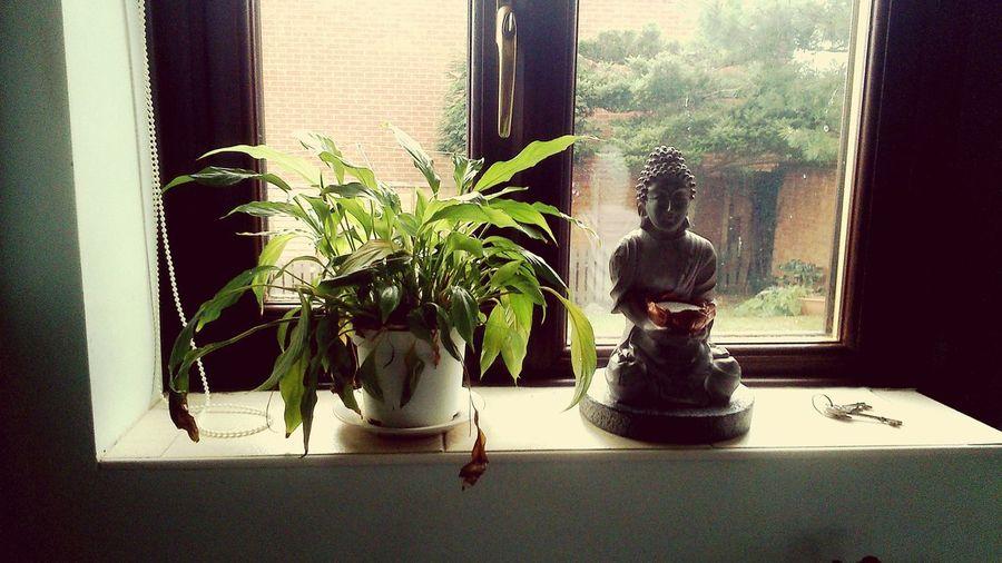 Peaceful beauty. Buddha Plant Window Garden Buddhism Statue Idol Peaceful Beauty Redefined