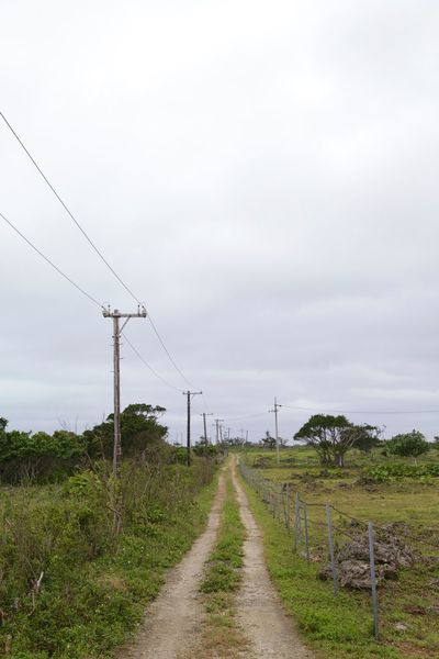 Agriculture Beauty In Nature Cable Day Electricity  Electricity Pylon Grass Growth Landscape Nature No People Outdoors Power Line  Power Supply Sky The Way Forward Tranquility Tree