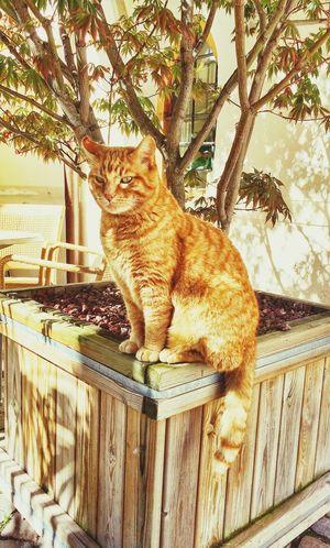 My glamourpuss assistant Cat Animals Italy Sunshine