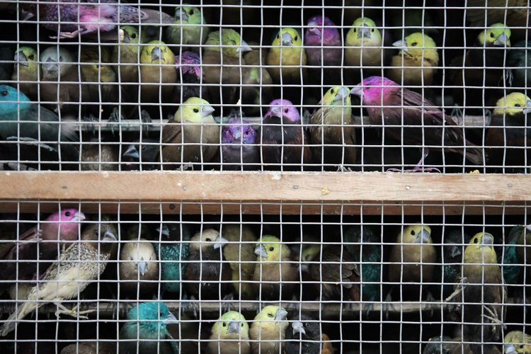 Birds Animal Themes Animals In Captivity Bird Birdcage Cage Close-up Day Large Group Of Animals Mammal Metal Metal Grate No People Outdoors Pets Pet Portraits