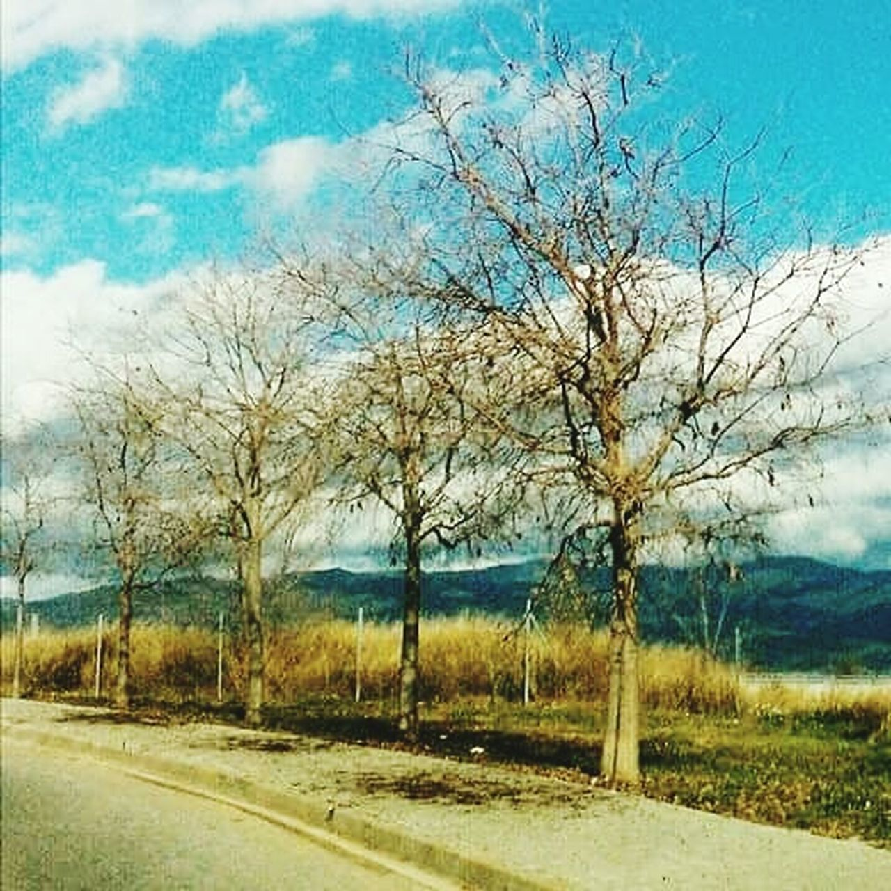 tree, sky, cloud - sky, landscape, road, bare tree, blue, nature, scenics, no people, rural scene, outdoors, day, beauty in nature
