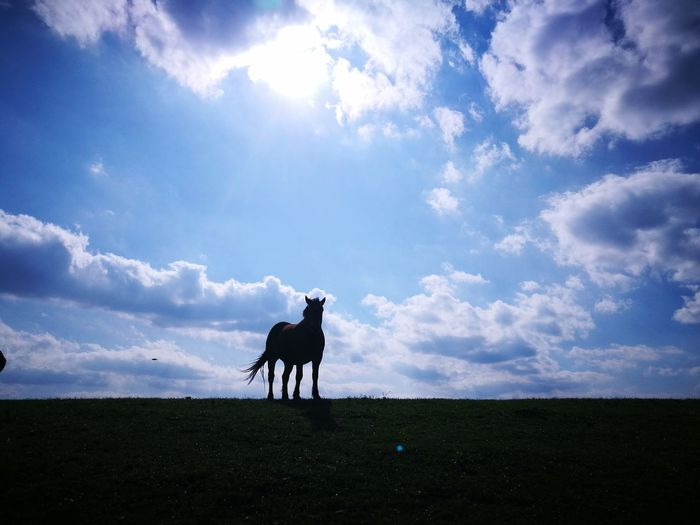 Horse Cloud - Sky One Animal Beauty In Nature EyeEm Nature Lover Tranquil Scene Eye4photography  Animal Themes Domestic Animals Agriculture Sky Outdoors Nature Day ⛅ EyeEm Best Shots Lonjsko Polje Croatia