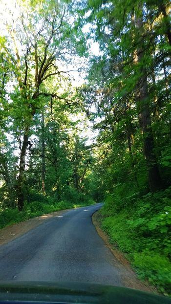 Tree Road The Way Forward Day No People Outdoors Growth Green Color Transportation Nature Water Beauty In Nature Sky Rural Scene Tree Trees Shade Shady Trees Country Road Beauty In Nature Oregon Beauty Forest View Tranquil Scene