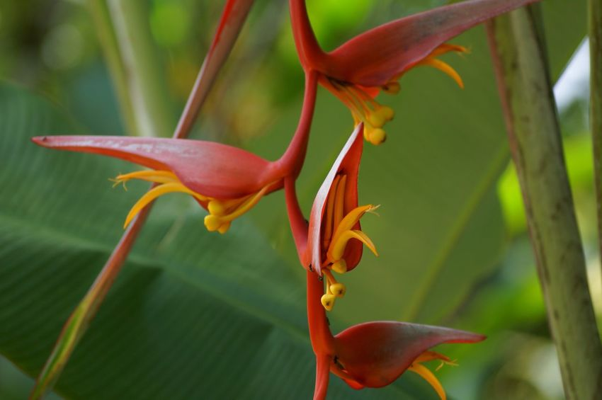Flowers Exotic Flowers Tapijulapa, Tabasco Jardin De Dios
