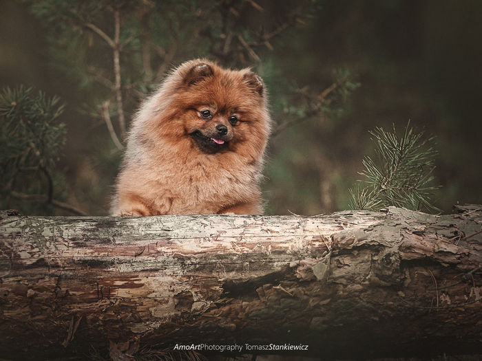 Miśka Proud Family Friend Friendship Love Lovely EyeEm Selects Beauty Beautyful  Colorful Color Flower Pomeranian Puppy Dog Dogs Colors Autumn Spitz Walk Walking Pets Runing Run Happy Portrait Looking At Camera Tree Baboon Close-up