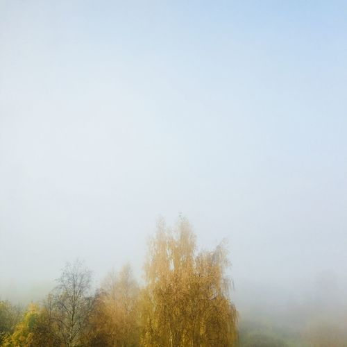 Mist Morning Nature Tree Outdoors No People Landscape Sky Fog