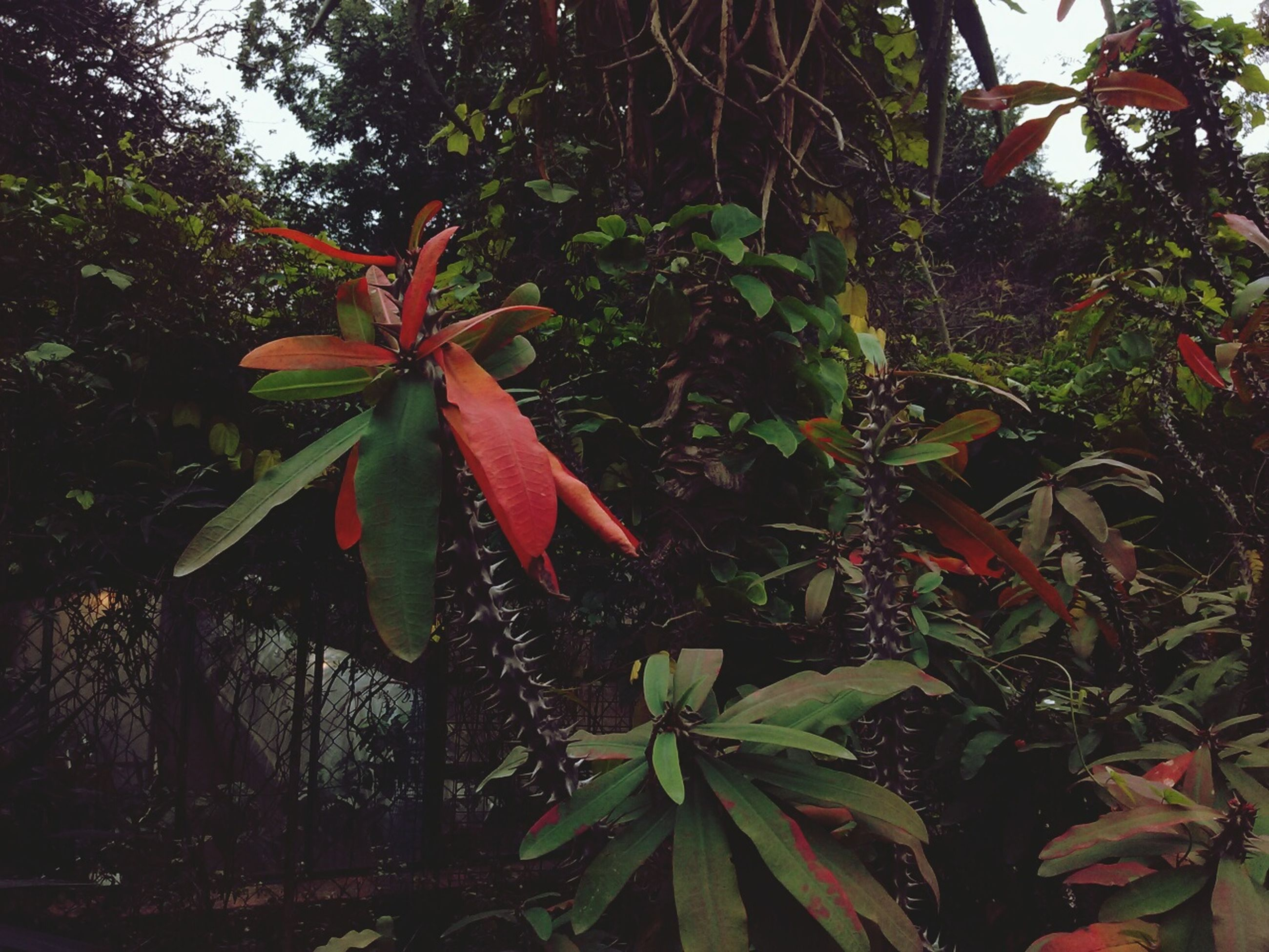 growth, plant, leaf, tree, green color, nature, red, close-up, day, outdoors, beauty in nature, no people, tranquility, green, growing, focus on foreground, lush foliage, selective focus