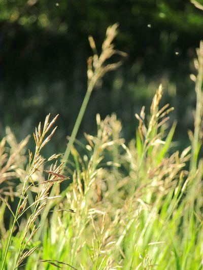 трава Природа зеленый лето красиво солнечно Красочно Grass Nature Green Summer Beauty In Nature Beauty Sunny Colorful First Eyeem Photo