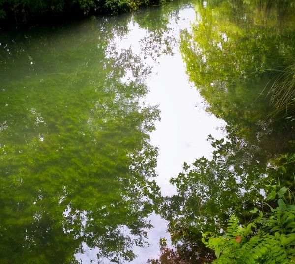 Where Shadows Meet Transparencies And They Blend In Perfect Harmony Natural Reserve And Bird Sanctuary Of Cervara Quinto Di Treviso Treviso Veneto Italy Travel Photography Travel Voyage Traveling Mobile Photography Fine Art Photography Nature Trees Water Plants Reflections Over Transparencies