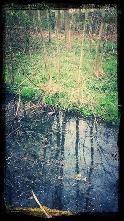 reflection in the Wienburgpark Walking Around Instagram #followme #follow #eyeem #awesome #streamzoo #instahub #photo #sigueme #followhim #cute #follow4follow F4f Followback [ Taking Photos Reflection