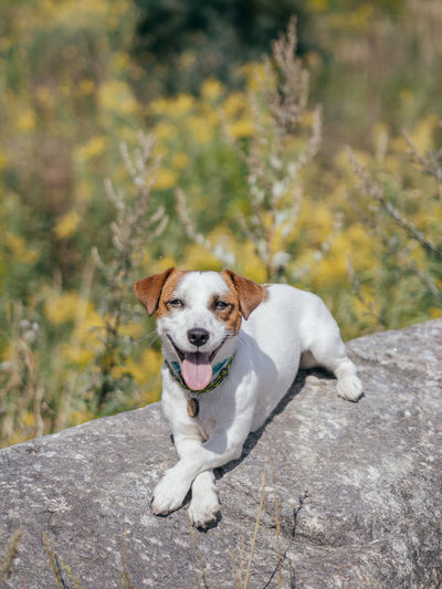 Portrait of dog sitting on rock