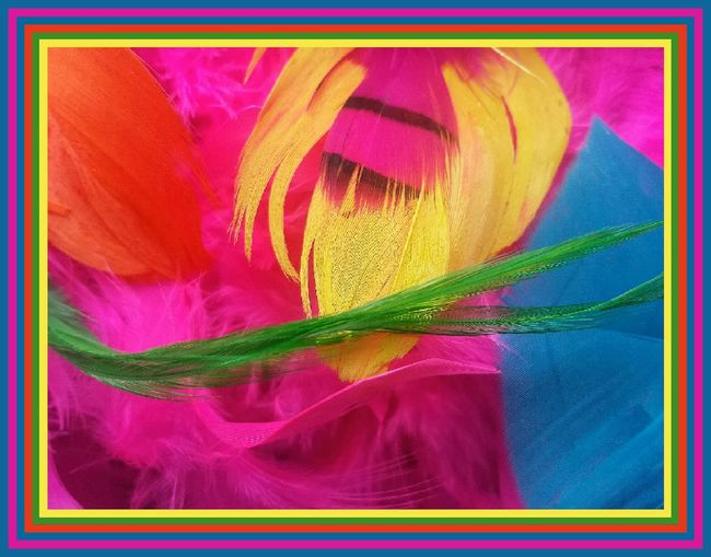 Phone Photography Samsung Galaxy S4 Samsung Galaxy S4 Phone Multi Colored Colorfull Art Color Splash Color Explosion Colorsplash Colorful Bright Colors Feathers Feather Collection Featherlisious
