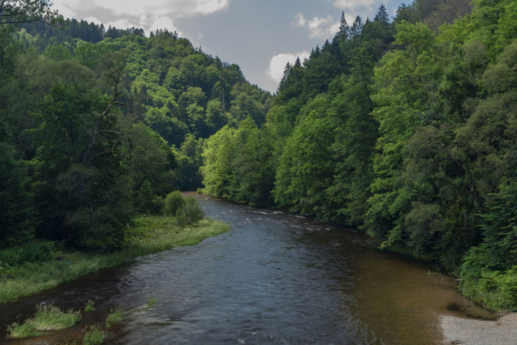 River amidst trees in forest against sky