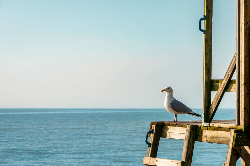 Seagull perching on wooden post by sea against clear sky