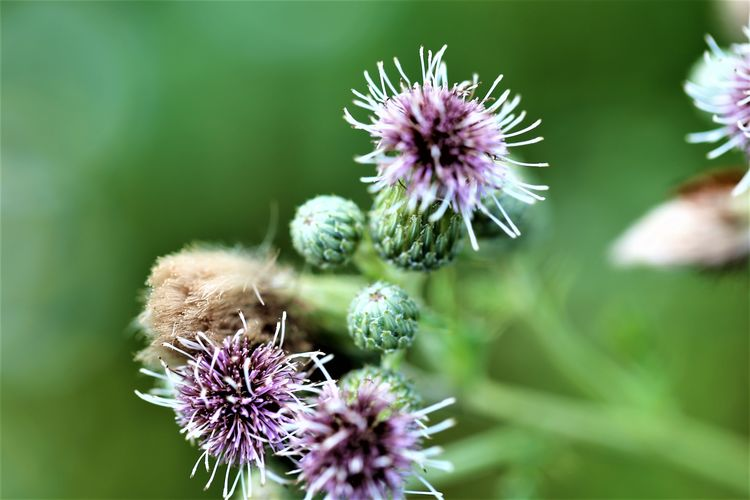 Insect Thistle Animals In The Wild Animal Themes Pollination Purple Nature No People Petal Inflorescence Flower Head Vulnerability  Plant Beauty In Nature Flower Flowering Plant Freshness Fragility Close-up Growth Bee Outdoors