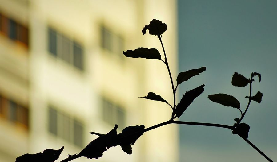 Flowers Plant Nature Growth No People Flower Vulnerability  Flowering Plant Day Focus On Foreground Plant Part Leaf Fragility Outdoors Silhouette Beauty In Nature Built Structure Low Angle View Sky Plant Stem Architecture