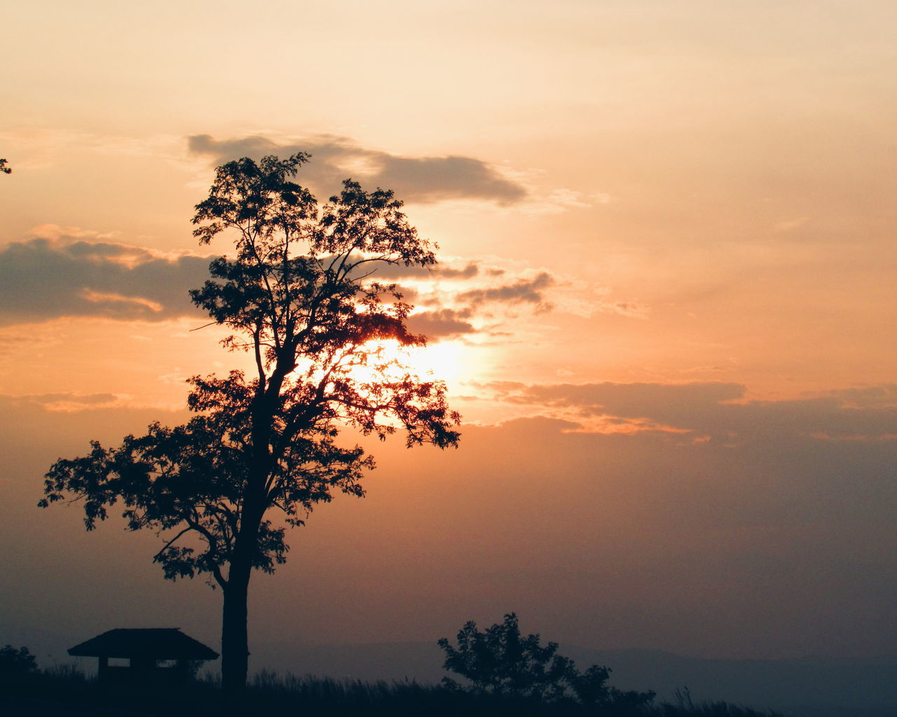 Silhouette Of Trees On Field At Sunset