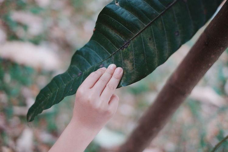 Close-up of child hand holding leaf at farm