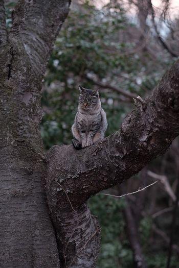 Tree One Animal Nature Beauty In Nature Fujifilm FUJIFILM X-T1 Hiroshima Cat