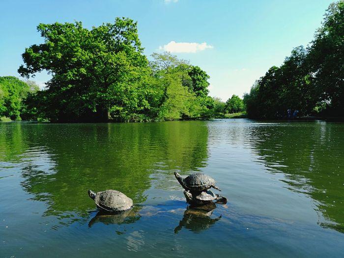 Turtles Lake P20 Huaweip20