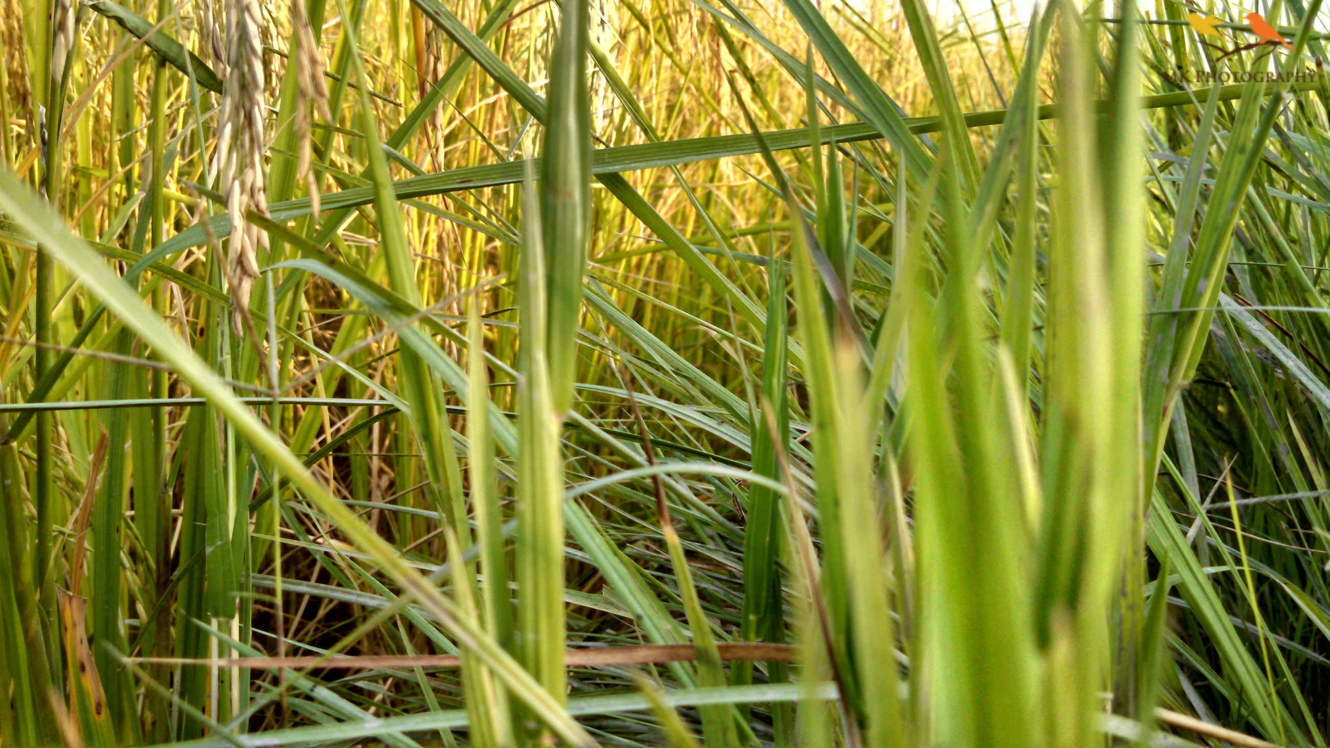growth, plant, green color, close-up, grass, full frame, backgrounds, blade of grass, selective focus, nature, lush foliage, green, day, beauty in nature, outdoors, vibrant color, freshness, tranquility, scenics, botany, stalk, remote, growing, fragility