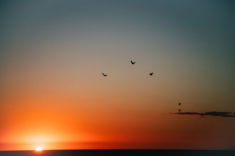 Sunset Sky Scenics - Nature Beauty In Nature Bird Vertebrate Silhouette Orange Color Animal Animal Themes Group Of Animals Animals In The Wild Sea Tranquil Scene Flying Water Animal Wildlife Tranquility Horizon Over Water Nature No People Flock Of Birds