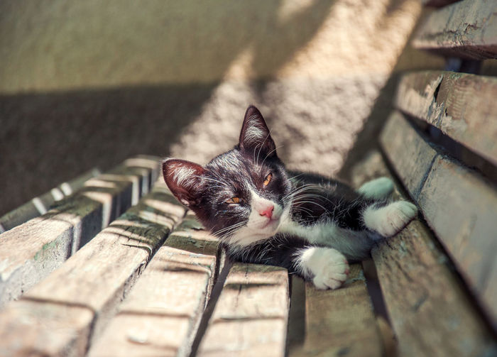 Kitten relaxing under the sun EyeEmNewHere Animal Themes Cat Close-up Day Domestic Animals Domestic Cat Feline Kitten Mammal No People One Animal Outdoors Pets Portrait Whisker