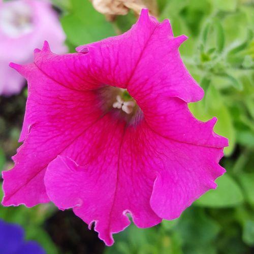 Nature's Diversities Spring 2016 Colors Of Nature Petals🌸 Beautiful Colors Color Splash Petalsandbuds Pink Flowers Garden_styles
