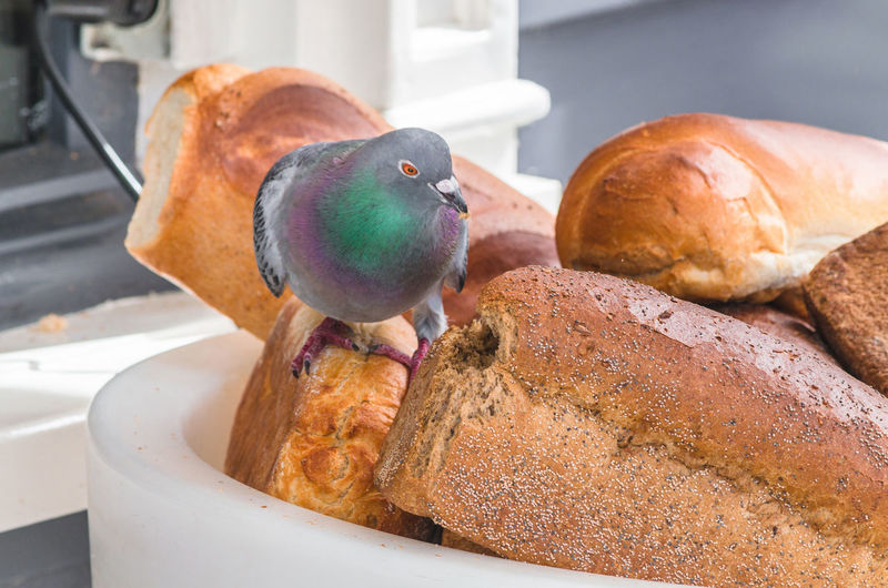 Close-Up Of Pigeon Perching On Bread