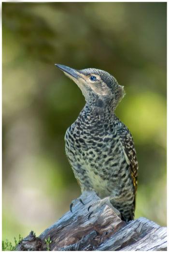 Animal Animal Wildlife Bird Bird Photography Birds_collection Close-up Focus On Foreground Nature Pajaro Carpintero Perching Woodpecker