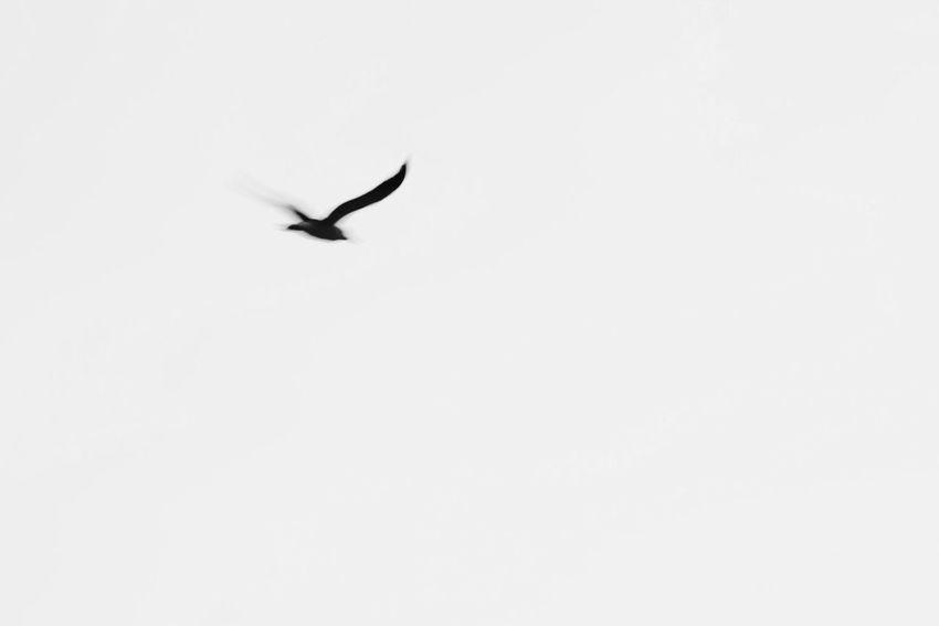 Photography Minimalism Black And White EyeEm Best Shots