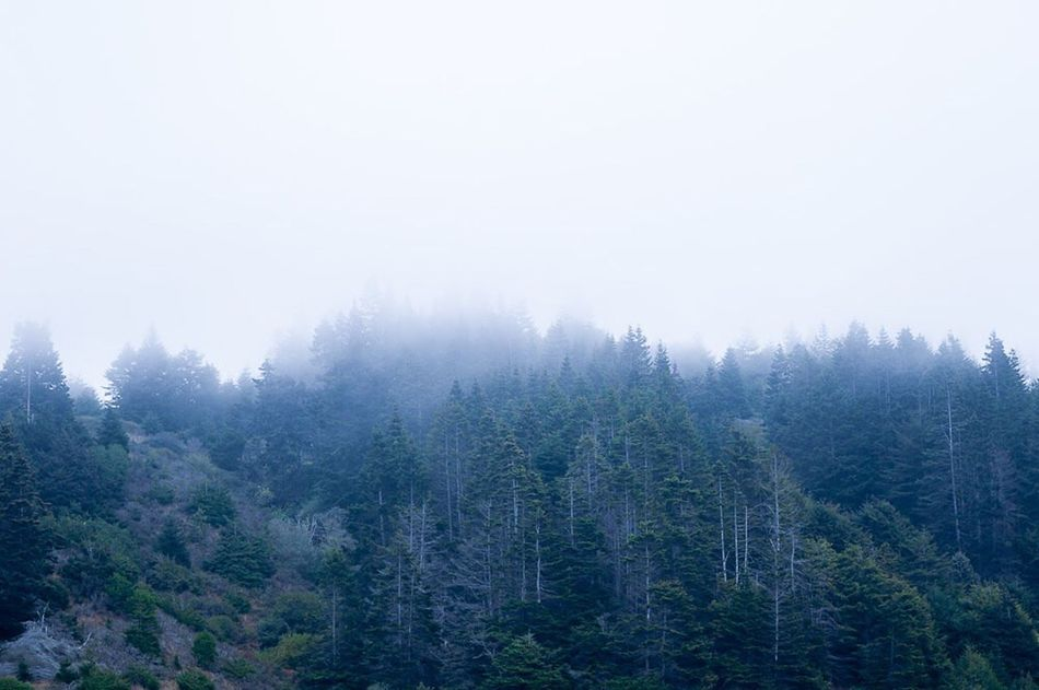 Foggy Morning Foggy Fog In The Trees Foggy Landscape Foggy Forest Mountains PNW PNWonderland Pnwnaturescapes Pnwcollective Pnwanderlust Pnwexplorations