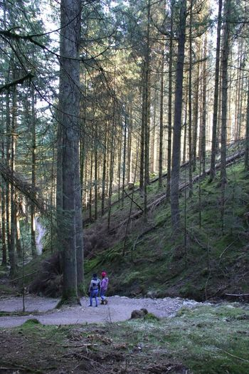 Cumbria Females Lake District Sunlight Adult Adventure Beauty In Nature Day Forest Forest Photography Full Length Growth Hiking Nature Outdoors People Real People Tree Two People Walking Winlatter