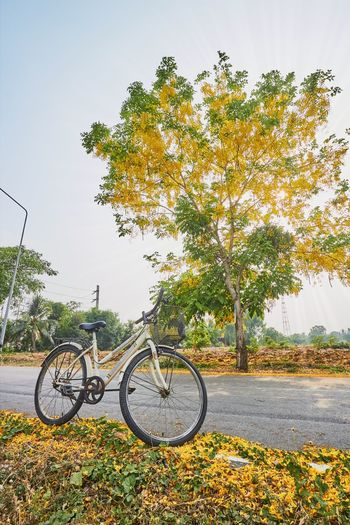 Bicycle Tree Yellow Flower Evening Sunlight Sunrays Travel Journey Lifestyle Leisure Activity Transportation Vehicle Road Street Rural Scene Countryside Thailand Summer Spring Blossom Flora Paint The Town Yellow