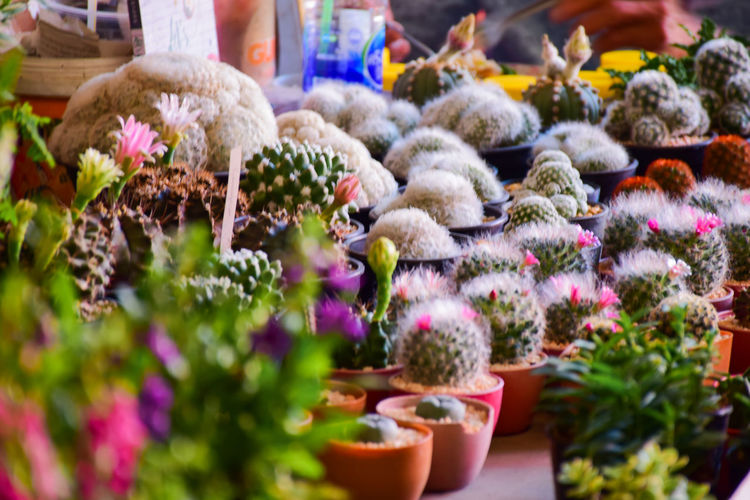 Close-up of potted plants at market