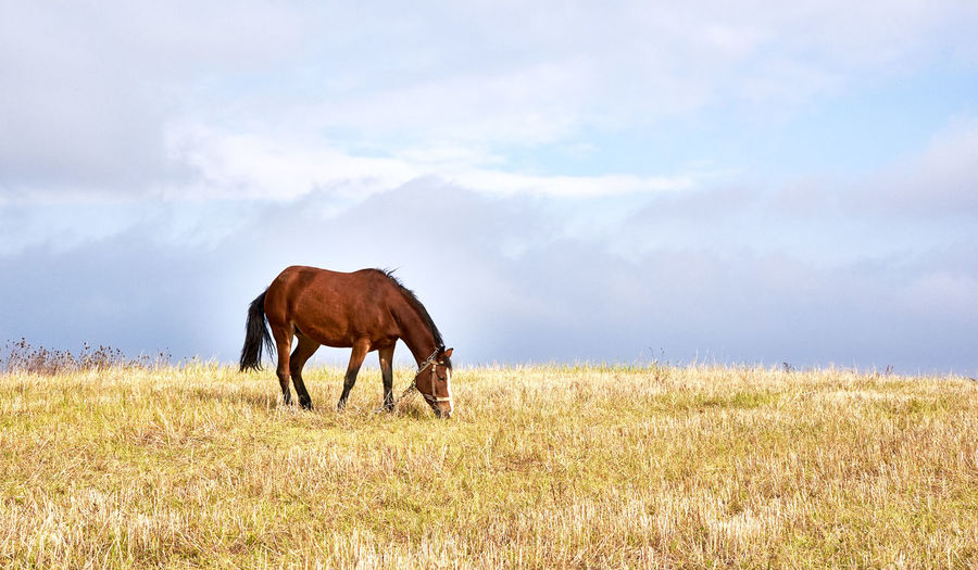 Horse Grazing On Grassy Field Against Sky