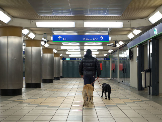 Mam and two dogs ByPass Columns Dog Dogs Dogs Life Domestic Animals Full Length Indoors  Jacket Man Man With Dog Man With Dogs Metro Station Metropolitan Dog One Man Only One Person Only Men Real People Rear View Suburban Subway People Subway Station Underground Underground Station  Underpass