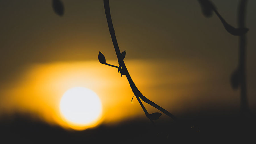 Sunset Plant Sun Beauty In Nature Orange Color Silhouette Close-up Nature No People Sky Focus On Foreground Growth Plant Stem Outdoors Plant Part Twig Leaf Selective Focus Tree Branch EyeEm Best Shots EyeEm Nature Lover EyeEm Gallery My Best Photo