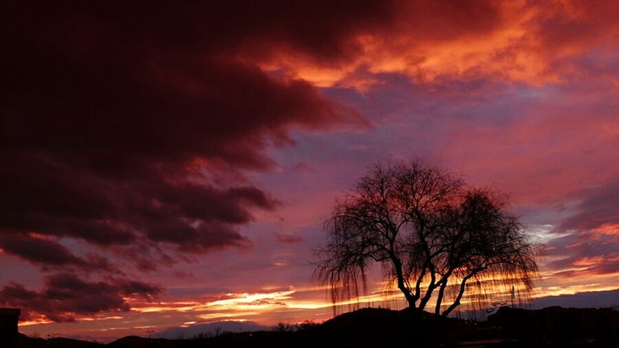 Landscape Sunrise Goodmorning Turkey Ankara Ankarakalesi Silhouette Fz100 Panasonic Lumix Panasonic Fz100 Tree