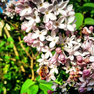 Salento Ortelle Nature Natura Campagna Fiore Fiori Puglia Italia Italy Flower Flowers Api Ape